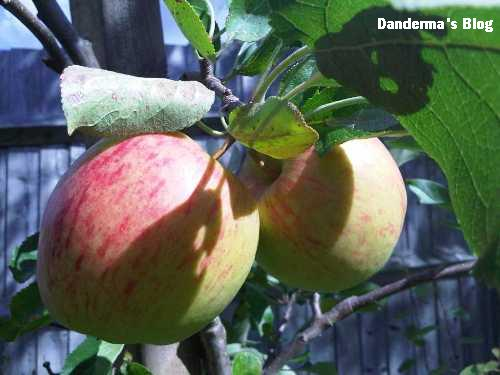 Don T Sit Under The Apple Tree With Any One Else But Me